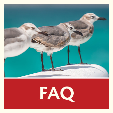 FAQ Seagulls in the Caribbean